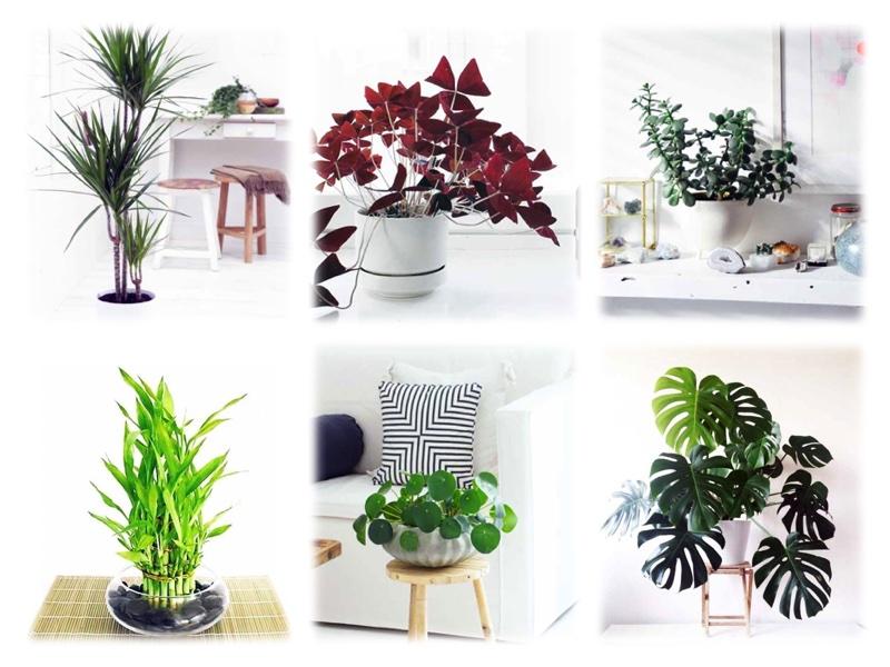 Ev Saksi Bitkileri Yesil Yaprakli Ev Cicekleri Isimleri Permolit